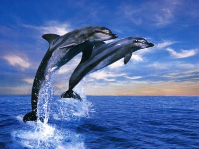 dauphins jtdg