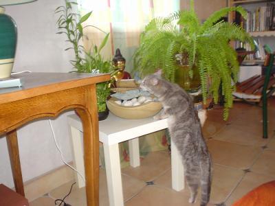 un chat zen