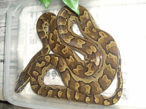 python sebae  sans d oute ma prochaine aquisition