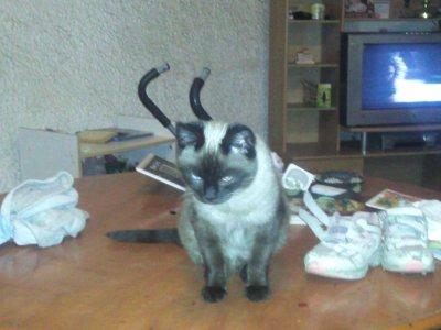 Le chaton de ma vie <3