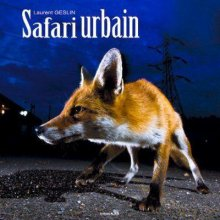 Safari urbain