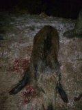 Photo de le-chasseur-08