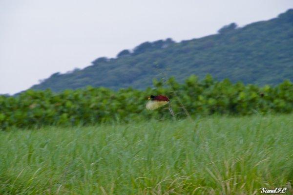 6273 / Les marais de Kaw avec Patou et Bounette