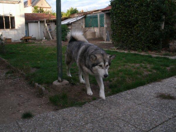 séance photos de mon loup