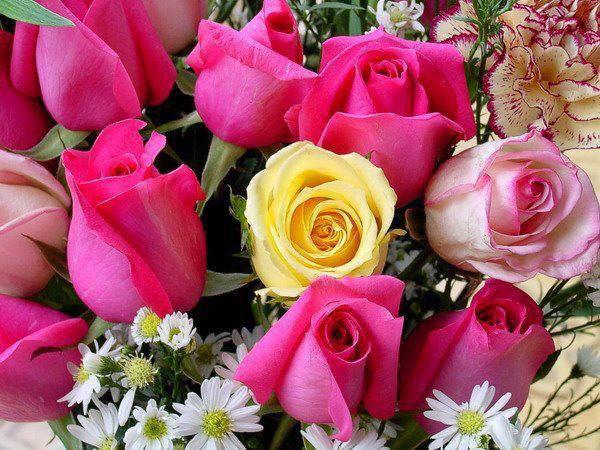 الوردة الحمراء (( احبك )) والوردة الخضراء (( اثق بك )) والوردة البيضاء (( احتاج لك )) والوردة الصفراء (( اغار عليك )) والوردة البنفسجية (( اعشقك )) .........والوردة الجافة (( انتهى كل شئ )) الورده السوداء ((أكرهــك )) فأي ورده سوف تهديـــها لحبيــــــــــبك ؟؟