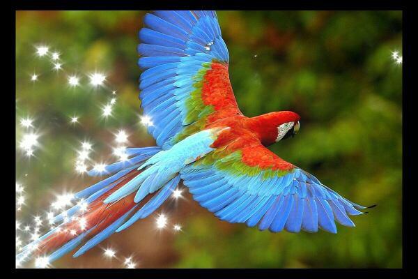 parrote