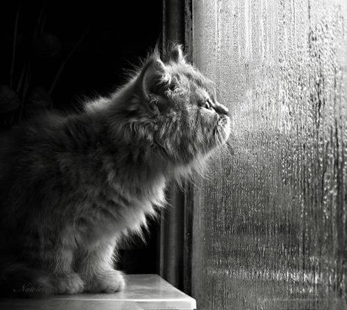 De la mélancolie à la dépression  ...