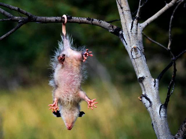 """Un grand sage a dit: """"si tes neurones disparaissent, claque des mains""""..."""
