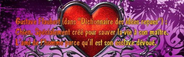 Citation 8