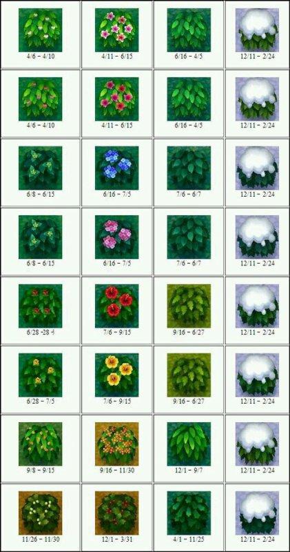 Les buissons suivants les différentes saisons