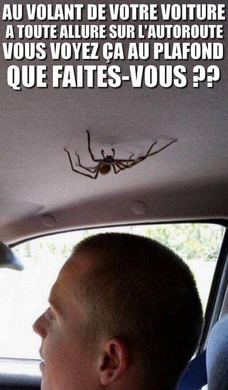 Ouhhhh l'horreur... moi juste une mouche m'agace en bagnole, alors ça...Je deviens folle!!!!