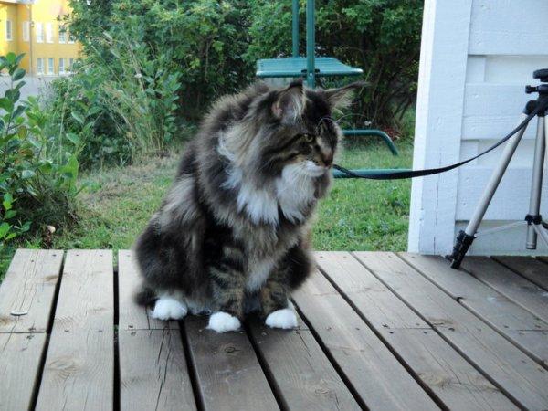 un chat qui fais rever