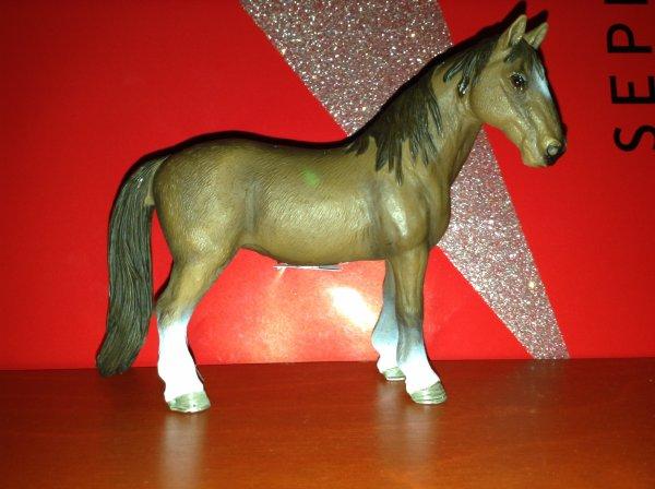 Nos chevaux (partie2)