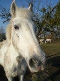Photo de Horses-Are-Wonderful