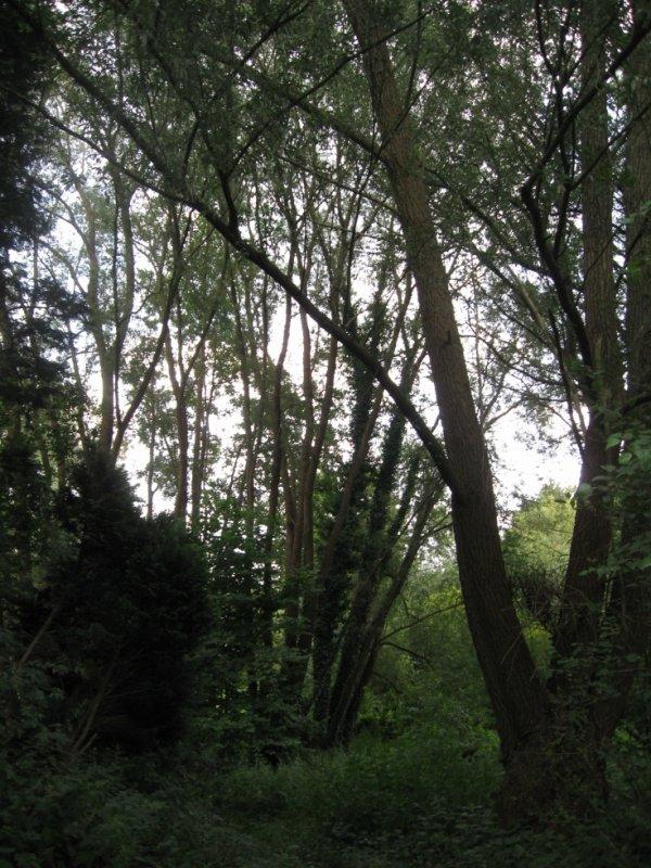 La nature, encore un peu...