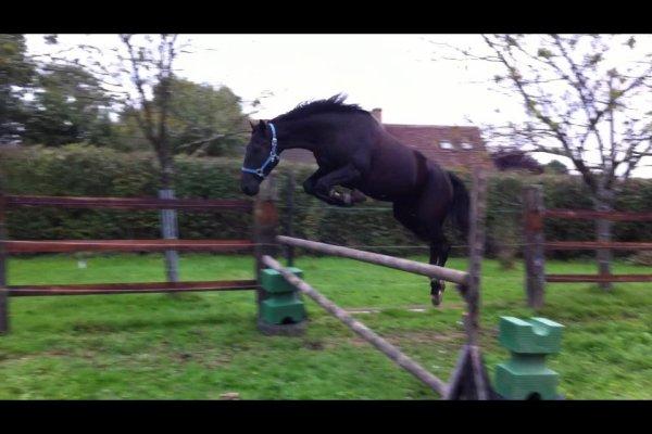 Jump, jump.