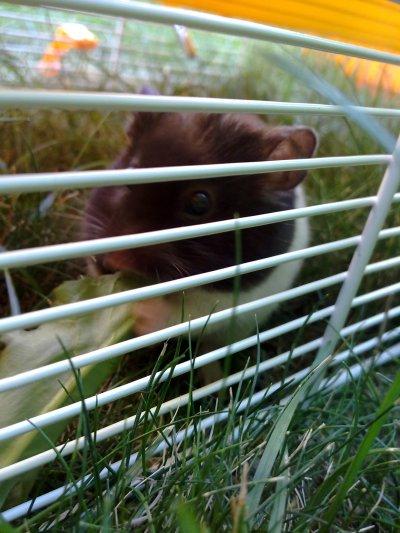 Cachou dans le jardin ! :D