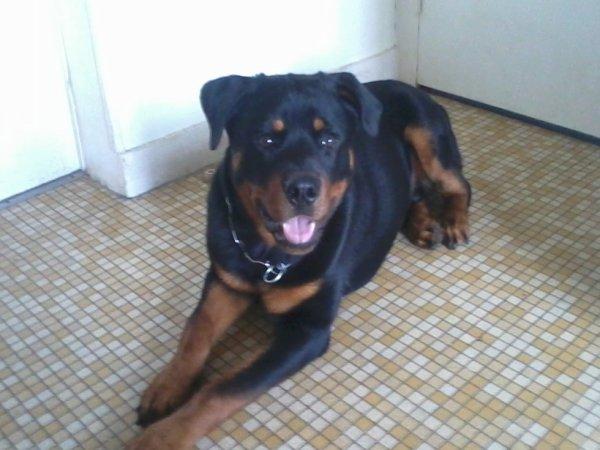 hatila a ses 7 mois et il fait 30 kg pour 59 cm