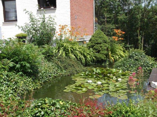 Mon étang et son évolution de 1998 à juin 2014.