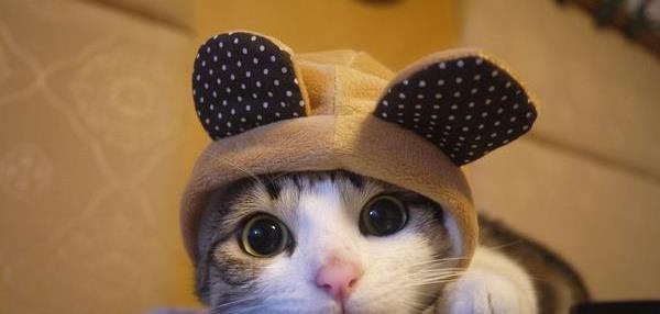 ;) tro mimi ces petits chats jadore :)