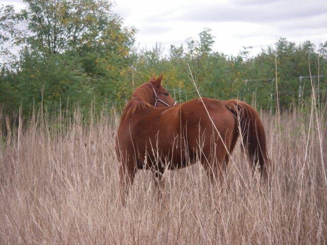 blog de chevaux noisetiers blog de chevaux noisetiers. Black Bedroom Furniture Sets. Home Design Ideas