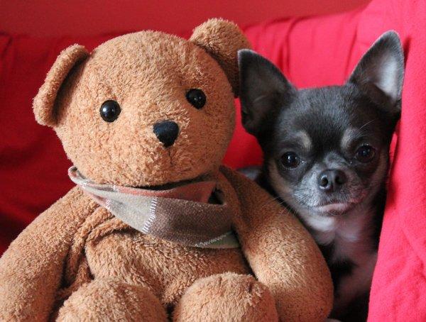 Avec l'ours en peluche .....