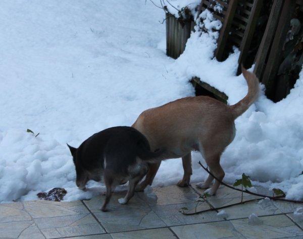 Dans la neige ....