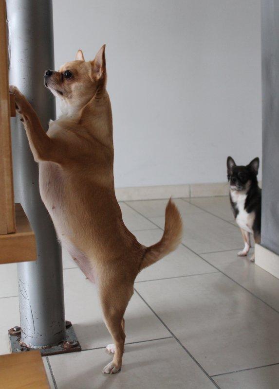 Pourquoi Zoé reste sur l'escalier ???