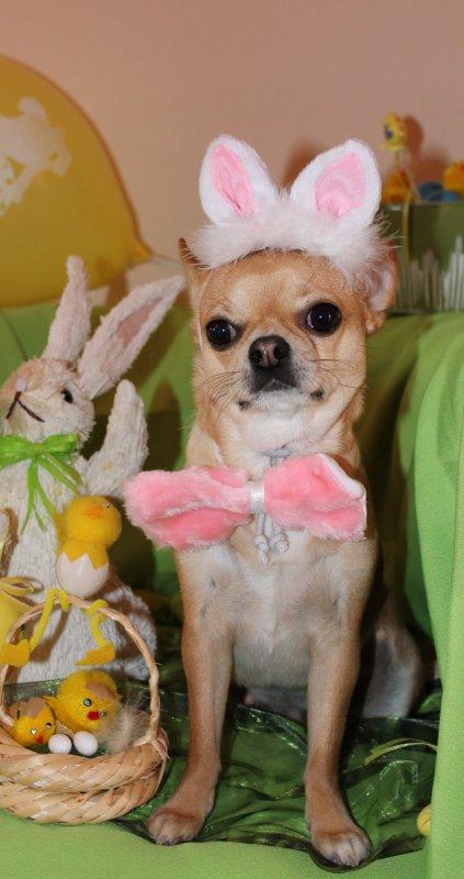 Diego et Flora vous souhaitent de Joyeuses Fêtes de Pâques