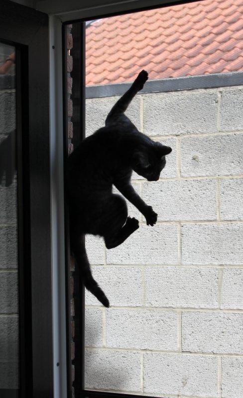 """Zoé est un """"spider cat"""".........."""