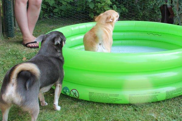 """Qui dit """"soleil""""..... dit """"piscine"""" !!!!  (sans eau et avec de l'eau )"""