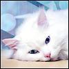 catz4ever