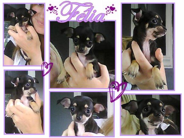 ♥ Félia ♥
