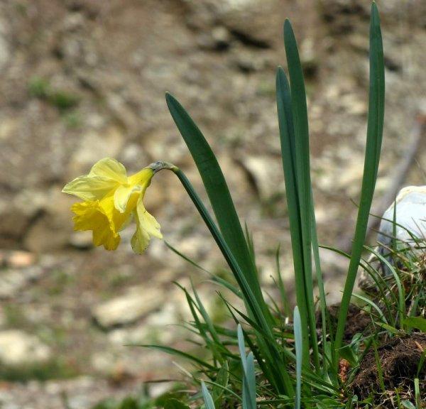 fleurs des Préalpes 2