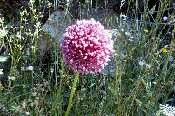 fleurs du var