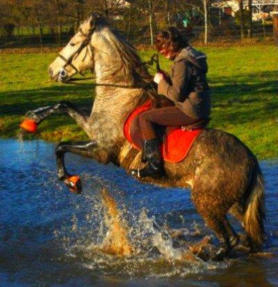 Les chevaux n'ont qu'un defaut...comme les hommes, ils meurent.