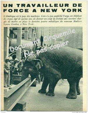 Les Elephants sont Utiles