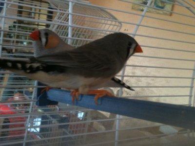 Mes deux premiers oiseaux