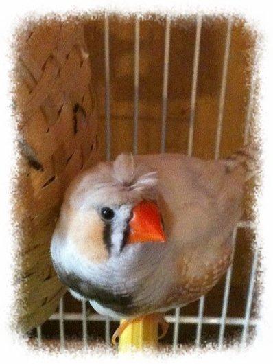 Petit Birdy