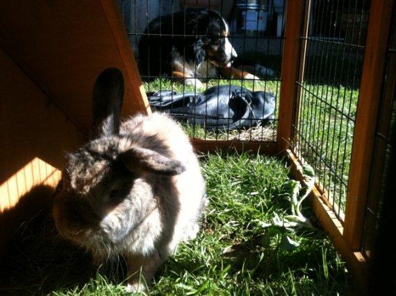 Aprem bronzette pour le lapin