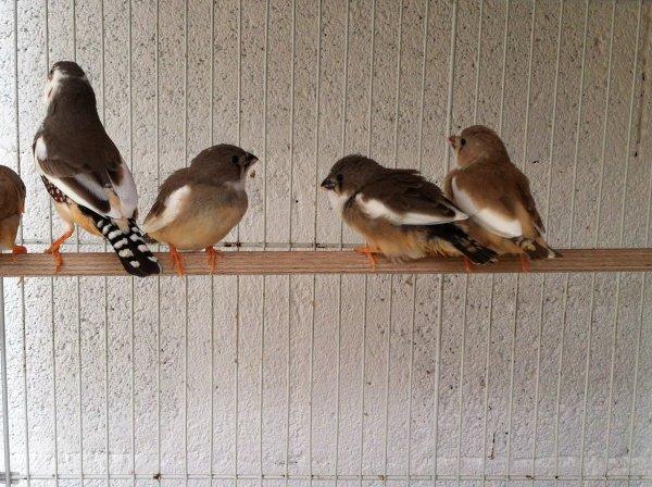 La sortie du nid !