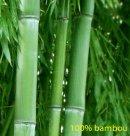 Photo de le-bambou-vert747