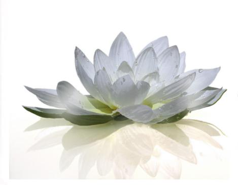 Sen trang dong nai trung hau lotus blanc fleur sacr - Fleur de lotus bouddhisme ...