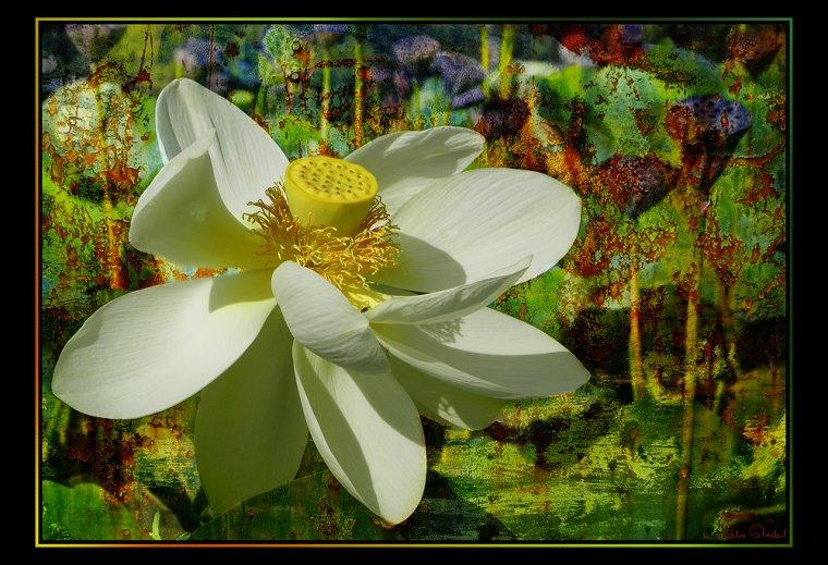 Sen trang dong nai trung hau lotus blanc fleur sacr de bouddhisme la soci t a besoin de - Fleur de lotus bouddhisme ...