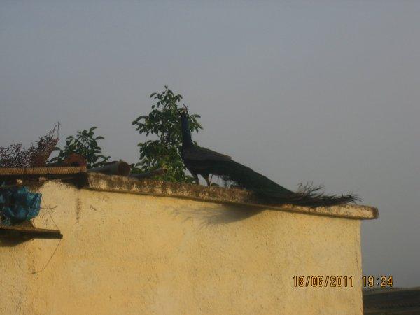 samedi 18 juin 2011 19:24