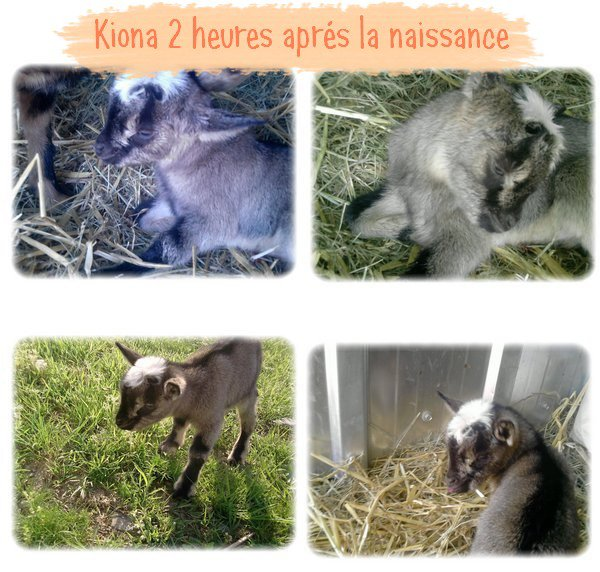 L'histoire de Kiona