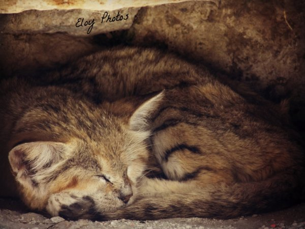 """Le sommeil est """"dort"""""""