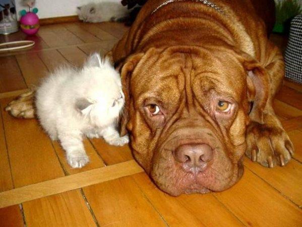 « Les chiens ne m'ont jamais mordue. Seulement les humains ... »  [Marilyn Monroe]