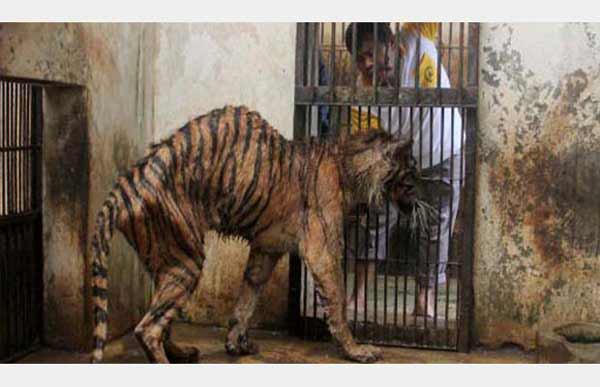 C'est scandaleux de faire ça à ces pauvres animaux !