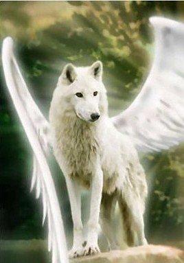 Hommage à nos Loups tués ....
